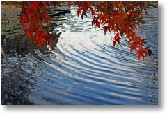 664376 autumnal ripples